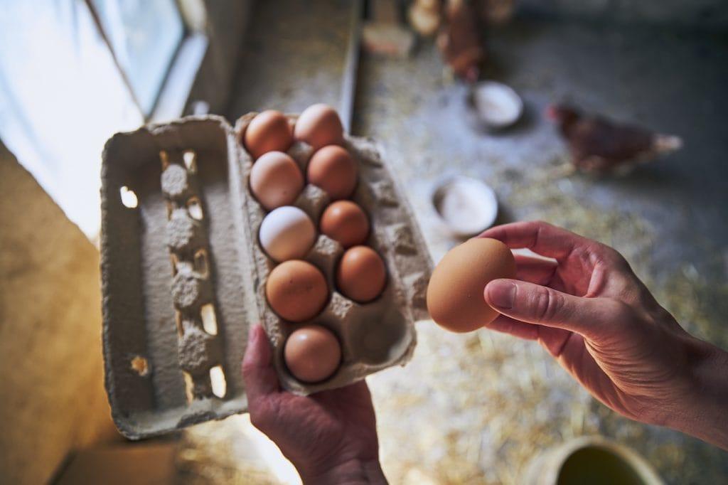 cuánta proteína huevo